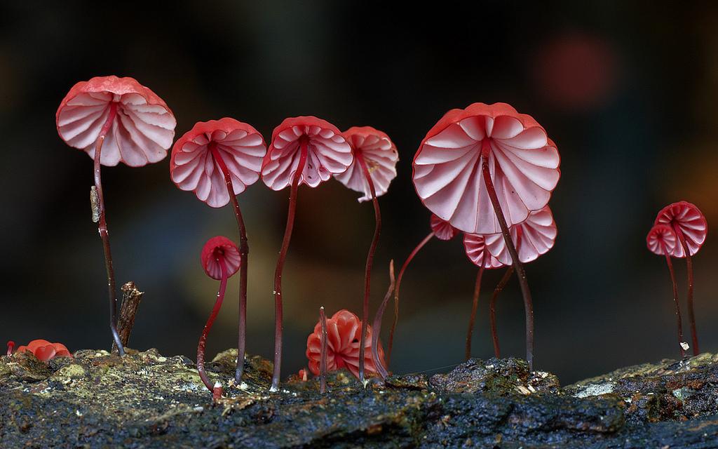 صور مذهلة من عالم الفطر الساحر
